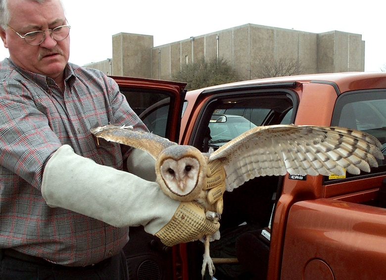SHEPPARD AIR FORCE BASE, Texas -- Tim Hunter, an 82nd Civil Engineer Squadron agronomist, handles a barn owl that was found in hangar.  The owl was released 25 miles away from the base into a more suitable and safer environment.  (Courtesy photo)
