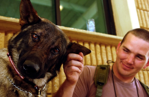 OPERATION IRAQI FREEDOM -- Staff Sgt. Chad Reemtsna, a military working dog handler and Hero, his military working dog both deployed from the 18th Security Forces Squadron, Kadena Air Base, Japan to the 363rd Expeditionary Security Forces Squadron, spend quality time together while waiting for more vehicles to search during a mobile security patrol on April 8. Before military working dogs can be deployed they must pass an explosive ordinance test. The 363rd ESFS search crews work around the clock checking coalition forces, third country nationals, and contractor vehicles for bombs and other explosive devices in support of Operation Iraqi Freedom at a forward deployed location in Southwest Asia.   (U.S. Air Force Photo by Staff Sgt. Matthew Hannen)