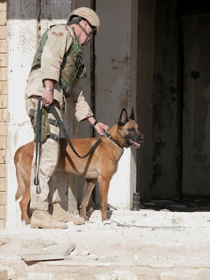 TALLIL AIR BASE, Iraq -- Senior Airman Eric Stafford and his partner, Tino, patrol a bombed out building near the perimeter of the base.  Tino is trained to detect explosives and is credited with stopping two men who breached the perimeter of the base.  Stafford is a military working dog handler here.  He and Tino are assigned to Moody Air Force Base, Ga.  (U.S. Air Force photo by Tech. Sgt. Bob Oldham)