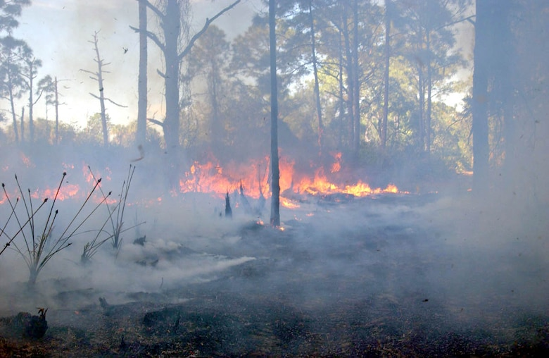 MACDILL AIR FORCE BASE, Fla. -- No injuries were reported during the prescribed burn that lasted more than 12 hours.  (U.S. Air Force photo by Staff Sgt. Randy Redman)