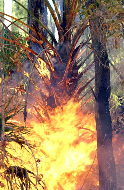 MACDILL AIR FORCE BASE, Fla. -- This palm tree was fully engulfed in less than five minutes.  They are highly flammable and one firefighter said they would burn even during a torrential downpour.  (U.S. Air Force photo by Staff Sgt. Randy Redman)
