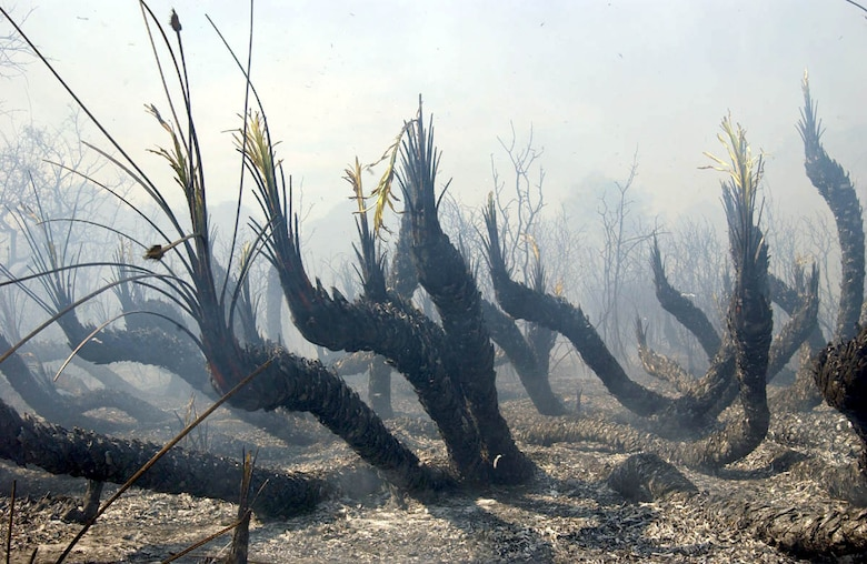 MACDILL AIR FORCE BASE, Fla. -- Ground-level vegetation was not completely decimated; however, only well-established plants like these were able to survive the fire.  (U.S. Air Force photo by Staff Sgt. Randy Redman)