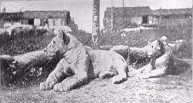 The mascots of the Escadrille Americaine were two lion cubs named Whiskey and Soda. (U.S. Air Force photo)