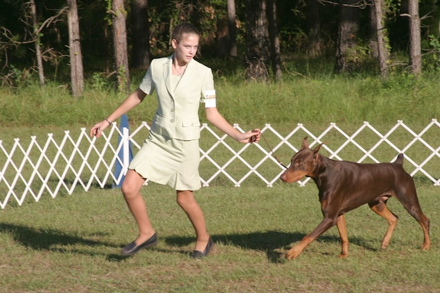 Stepahnie Tallant takes her Doberman Pinscher, Thunder, around the ring  during the Open Intermediate Junior Handler round of the Beaufort Kennel Club dog show. Tallant and Thunder won the Open Intermediate round and went on to win Best Junior Handler. (Marine Corps photo taken by Pfc. Zachary Dyer)
