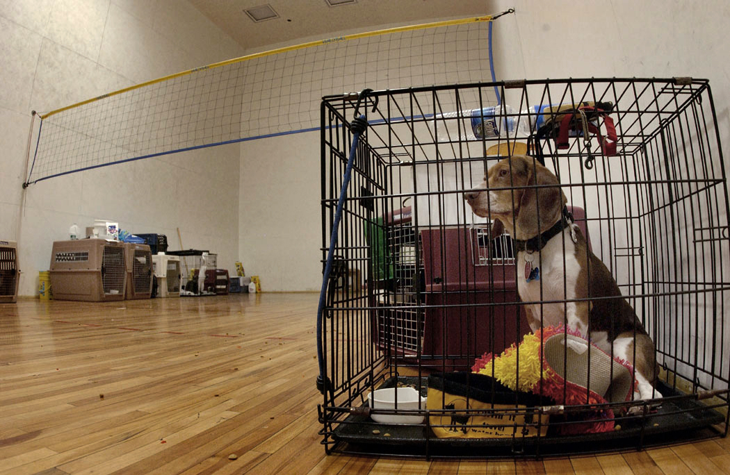 How To Crate Train A Puppy A Step By Step Guide