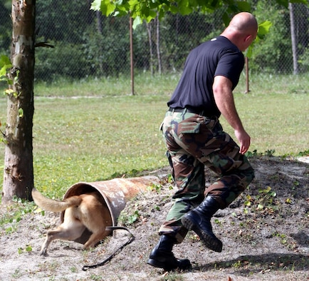 Staff Sgt. George Shepherd, 16th Security Forces Squadron K-9 handler, runs Sarah, a 7-year-old Belgian malinios, through an obedience course at the military working dog facility.  Although Sarah is the smallest MWD here, she is the fastest and the hardest hitting.