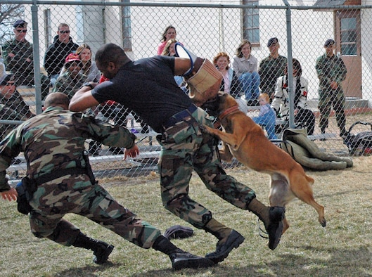 Tech. Sgt. Harold Gardner, 90th Security Forces Squadron, rushes Staff Sgt. Stacey Trucott, 90th SFS, in a demonstration for the 90th Security Forces Group spouses tour March 22. The rush act demonstrated that Zak, 90th SFS working dog, and any police canine will attack without order if their handler is being threatened (Photos by Airman Alex Martinez).