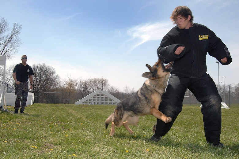 OFFUTT AIR FORCE BASE, Neb. -- Staff Sgt. Bryan Gudmundson, 55th Security Forces Squadron, realeases Norman, a 55th SFS military working dog, to chase down his target, volunteer Cole Tesar, during training April 17. Mr. Tesar is wearing an undergarment bite suit for protection. The Offutt K-9 unit performs regular training to maximize the dogs' effectiveness in the field. (U.S. Air Force Photo by Josh Plueger)