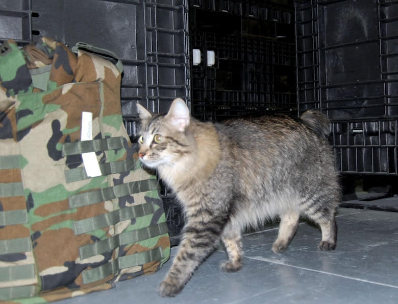 Supply Unit Uses Military Working Cat To Control Critters U S Air Force Display