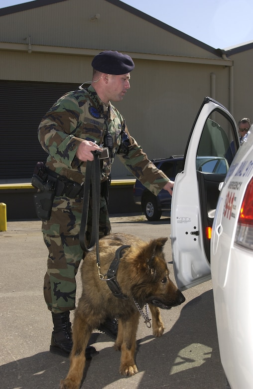 VANDENBERG AIR FORCE BASE, Calif. -- Senior Airman Alexander Colon, 30th Security Forces Squadron, loads his military working dog partner, Cargarro, into his squad car after a building sweep on May 10.  Security forces constantly train their bomb and drug sniffing dogs to seek out illegal items and potential threats.  (U.S. Air Force photo/Airman 1st Class Adam Guy)
