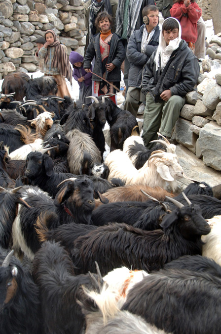 Team treats more than 2,000 Afghan animals during three-day
