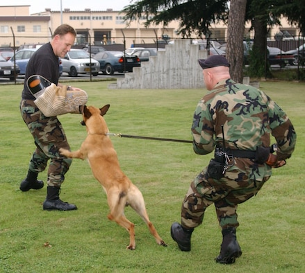 Col. Scott Goodwin, 374th Airlift Wing commander, participates in a 374th Security Forces Squadron K-9 simulated training scenario. Colonel Goodwin will relinquish command of the 374 AW Thursday at 9 a.m. at Hangar 15. (Courtesy photo)