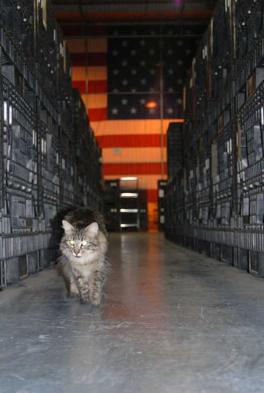 Wizzo patrols his section of the supply warehouse looking for any rodent activity while supporting the ongoing mission of maintaining deployment supplies. Wizzo currently has five kills consisting of one bird, one rat and three mice. (Photo by Airman 1st Class Mike Young)