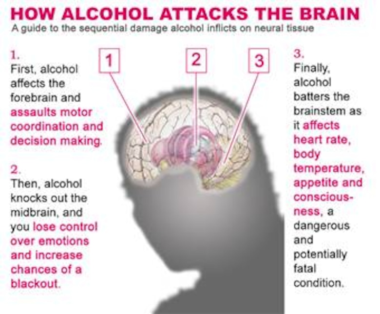 First, alcohol targets the brain's center for decision-making processes and muscular coordination in the forebrain. Then it unhinges the mind's normal system of checks and balances, leaving emotions unchecked by affecting the midbrain. Finally, alcohol attacks the brain stem and the body's vital functions. Preventing alcohol incidents is a must for mission effectiveness. (Graphic illustration by Senior Airman Stephen Cadette)