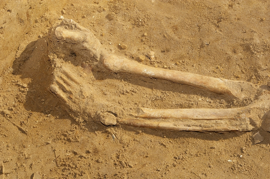 Human remains, thought to be between 1,900 and 2,000 years old, were found at the RAF Mildenhall officers' housing area in Beck Row during an archeological dig by the Suffolk County Council archeological service. The remains were discovered March 12, and finally uncovered March 14. The skeleton has now been removed from the area and will be studied by archeology specialists. (Air Force photo by Karen Abeyasekere)