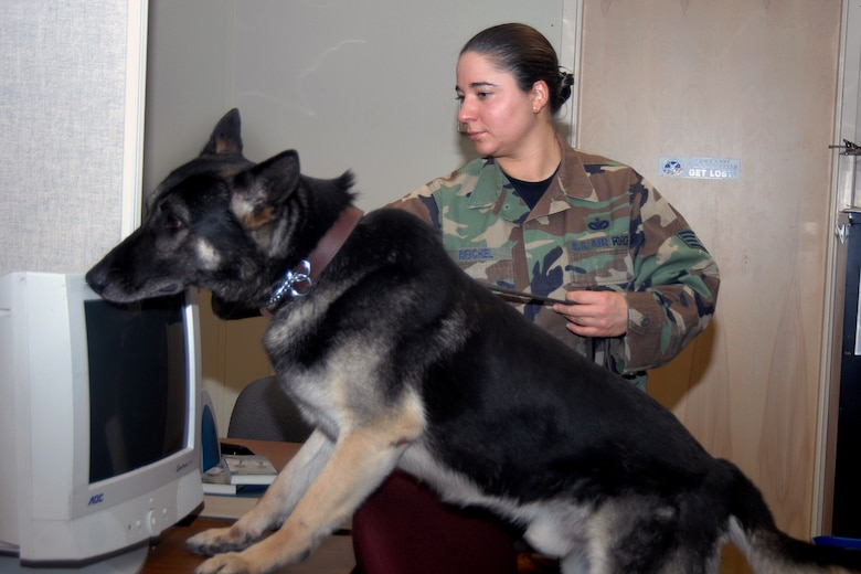 Staff Sergeant Jeanette Reichel, 66th Security Forces Squadron, and her Military Working Dog, Petya, a 6-year old German Sheppard, tattoo F-028, perform a search during her K-9 handler certification test. Sergeant Reichel entered the Hanscom history books on March 21 as the first female dog handler here in the past two decades after successfully completing her certification. (U.S. Air Force Photo by Linda LaBonte Britt)