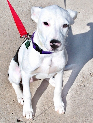Blanca was found by a military family near Barry Elementary School. She's received her first set of immunizations and is house broken.  She weighs 20 pounds and is approximately 5-months old.  She loves children and gets along well with other animals.  She's very playful.  Please call Adelaide Huff at 784-2507.