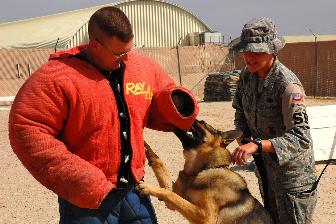 Tech. Sgt. Brandon Webb tries to keep his balance as Bert latches onto the bite suit during controlled aggression training as his handler, Staff Sgt. Laura Felts, gives commands Sept. 19 at a deployed location in Southwest Asia. Sergeant Webb is the 386th Expeditionary Security Forces Squadron kennel master. Sergeant Felts is a 386th Expeditionary Security Forces Squadron military working dog handler, and Bert is a 386th ESFS military working dog. Military working dog teams are a force multiplier for security forces. Military working dogs are trained to respond to a hostile threat to either themselves or their partner, with or without a command. (U.S. Air Force photo/Staff Sgt. Tia Schroeder)