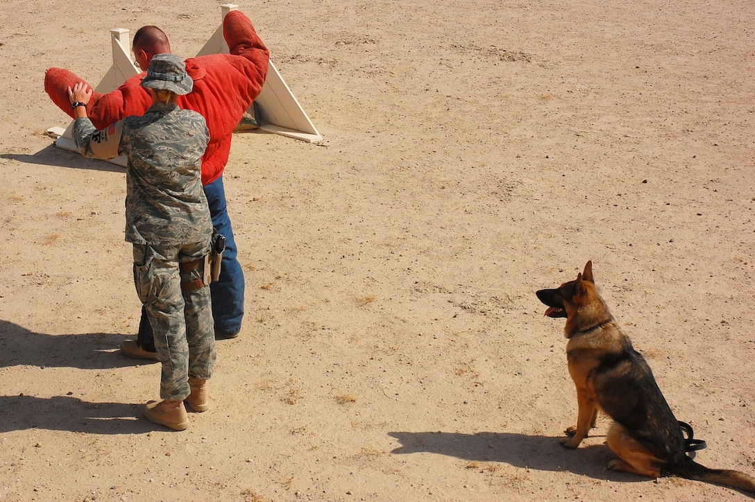 Staff Sgt. Laura Felts performs a search of a decoy Sept. 19 at a deployed location in Southwest Asia. Sergeant Felts is a 386th Expeditionary Security Forces Squadron military working dog handler. Bert, a 386th ESFS military working dog, sits in an overwatch position, substituting for a human partner. Military working dogs are trained to respond to a hostile threat to either themselves or their partner, with or without a command. (U.S. Air Force photo/Staff Sgt. Tia Schroeder)