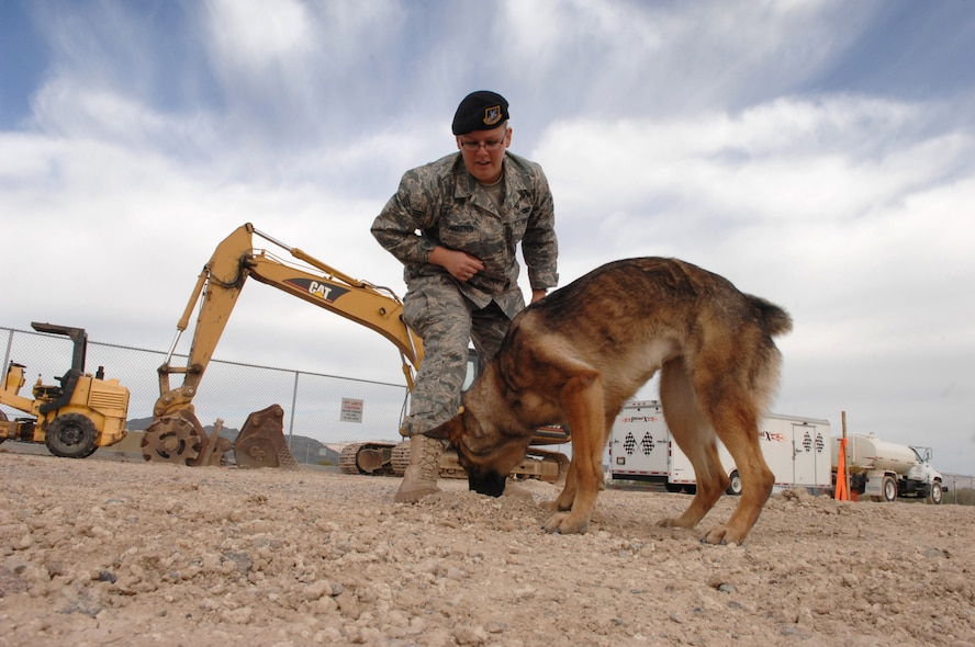 how to become a dog handler in the air force