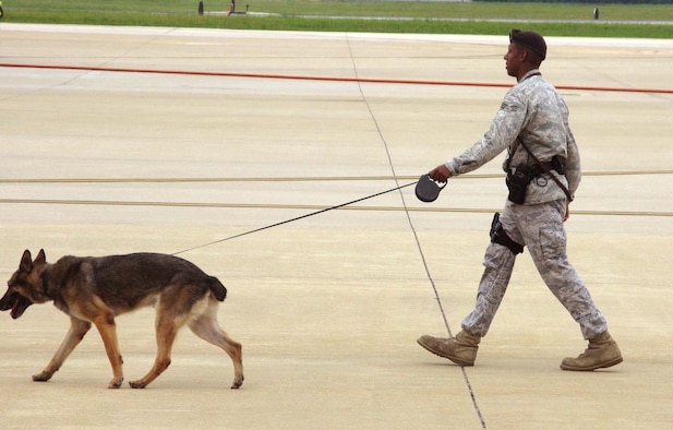 "ANDREWS AIR FORCE BASE, Md. -- Senior Airman Jauvarie Lewis of the 316th Security Forces Squadron here, walks with bomb-sniffing canine, ""Brit,"" Aug. 2.  The two of them and others from the 316th SFS teamed up with members of the 459th Air Refueling Wing to participate in a readiness exercise.  (U.S. Air Force photo/Capt. Tim Smith)"