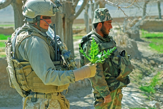 A Marine Special Operations Company's leatherneck examines a poppy plant handed to him by an Afghan National Army soldier (right) during a late February patrol through a Helmand Province village in which they were looking for Taliban fighters. Photo by Marine Staff Sgt. Luis P. Valdespino Jr.