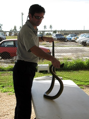 Marc Hall, Supervisory Wildlife Biologist of the United States Department of Agriculture, holds a large brown tree snake for display. The USDA on Andersen captures brown tree snakes on and around the flight line, the munitions storage areas and base housing by using traps, canine inspections, and spotlighting. (U.S. Air Force photo/Airman1st Class Carissa Morgan)