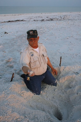 Johnny Jennings, 325th Civil Engineer Squadron Natural Resources wildlife technician, digs up Loggerhead turtle eggs on Tyndall Air Force Base's beach in order to relocate them to a safer location on high dunes.  This nest, which was the 31st found on Tyndall AFB this year, contains 115 newly laid eggs.
