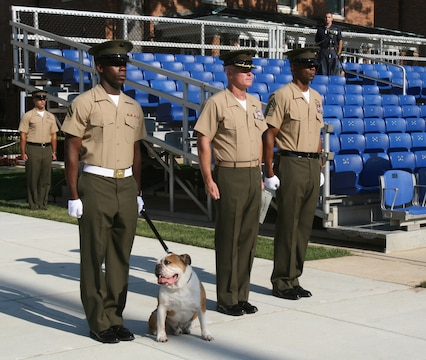 Sgt. Chesty XII, the official mascot of Marine Barracks Washington, stands at attention as his retirement certificate is read during his retirement ceremony at Marine Barracks Washington, July 25. Chesty served for 40 dog years as mascot.
