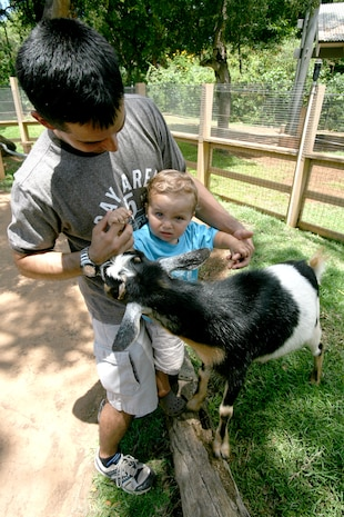 Army Chief Warrant Officer 2 Ken Lofgren and his 20-month-old son pet goats June 28 at the Honolulu Zoo's Keiki Zoo during Military Appreciation Day. The event featured numerous face painting and coloring stations for children to enjoy. Lofgren is an OH-58-D pilot with B Troop, 2-6 Cavalry.
