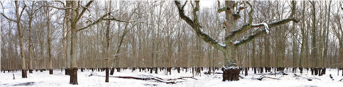 This view of Sinking Pond shows the stark contrast between the dark water lines on the tree trunks and the white snow. Sinking Pond, a special karst depression, is a 394-acre National Natural Landmark site on Arnold AFB. A unique feature of the site is that it can drain almost overnight as a function of a poorly understood change in groundwater hydrology. Maximum winter water depth varies from a few inches to 15 feet in various parts of the site. The pond is normally filled with water this time of year (November through July). However, due to the extended drought conditions in the area, the pond has been dry for some time. (Photo by Mike Hodges)