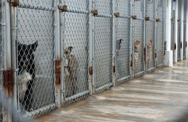 Stray dogs and unwanted pets are being kept at the 18th Services Squadron's Karing Kennels. Packs of strays have been seen around the base and are the source of recent attacks on family pets and other community members. (U.S. Air Force photo/Senior Airman Jeremy McGuffin)