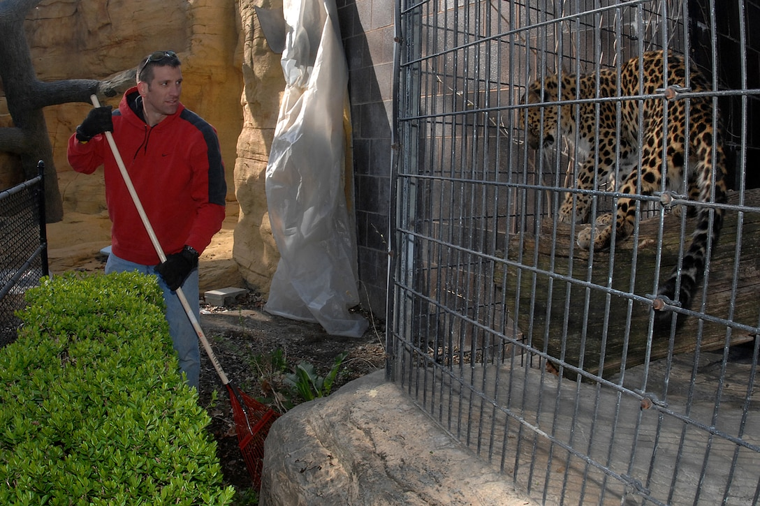 Master Sgt. Darin Smith, a production supervisor from the 373rd Training Squadron, rakes leaves around the cat complex while being monitored by some of its residents during the Offutt AFB zoo cleanup at the Henry Doorly Zoo April 26. (U.S. Air Force Photo By/Josh Plueger)