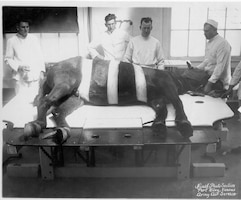 VETERINARIANS.  The care and treatment of horses was vital to maintaining the readiness of cavalry units.  Veterinarians were critical in ensuring the health and well being of the troopers' mounts.  Occasionally, Army veterinarians were called upon to perform medical procedures on special operating tables.  In the photograph, an upright horse has been secured to a specially designed tilt table.  The sedated animal was then rotated into position and the operation commenced.