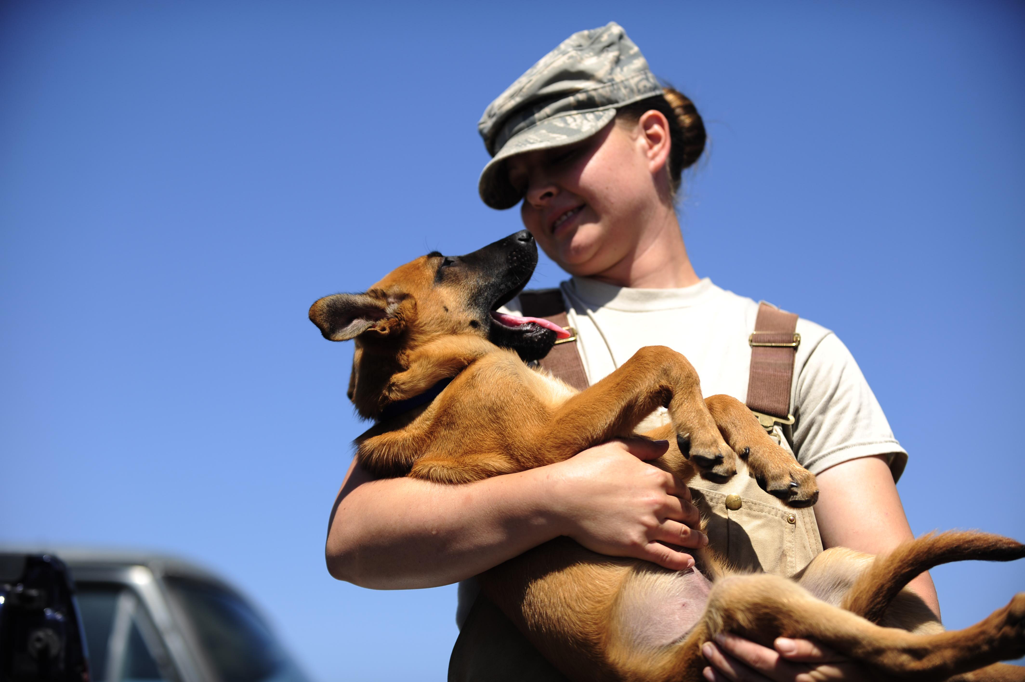 Lackland Military Working Dog Adoption Program