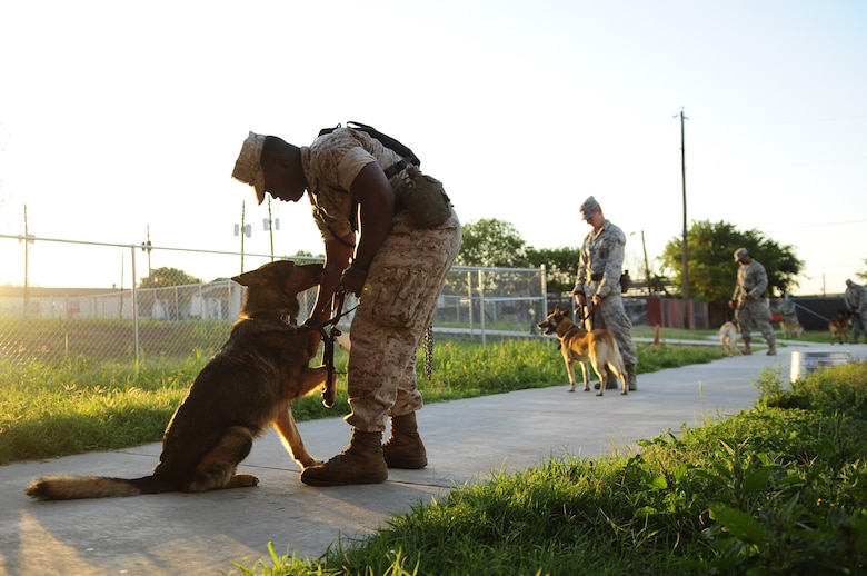 Military working dogs and their handlers wait outside the Military Working Dog Hospital for a check up at Lackland Air Force Base, Texas. Military working dogs are enrolled in a 60- to 90-day training program where they are taught to detect explosives and drugs. They are also taught deterrence training and how to protect their handler. (U.S. Air Force photo/Senior Airman Christopher Griffin)