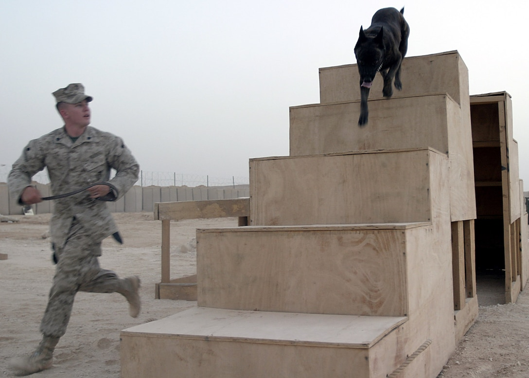 Camp Ripper, Al Anbar, Iraq (August 14, 2005)-- Regimental Combat Team-2 kennel master Sgt. Allen Smith, a 24- year-old Clinton, S.C., native, and Basco, a 5-year-old Dutch Shepherd, runs a training course. (Official USMC Photo by Corporal Ken Melton)