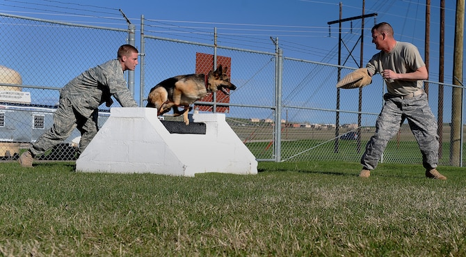 (Left) Senior Airman William Knight, 28th Security Forces Squadron dog handler, watches Rex, 28 SFS military working dog, chasing after a simulated attacker during aggression training in the obstacle course, here, May 6. Dog handlers perform training with their dogs daily to ensure deployment and real world readiness. (U.S. Air Force photo/Airman 1st Class Joshua J. Seybert)