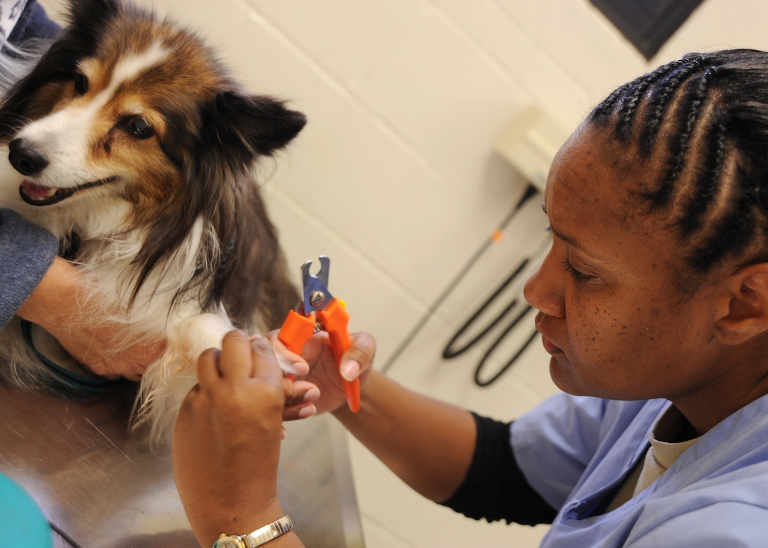 Army Sgt. Debbie McGregory-Russ, non-commissioned officer in charge of the McConnell Air Force Base, Kan., veterinary clinic, trims the nails of Buddy, a 14-year-old sheltie, Nov. 10, 2009, at the clinic. Elongated nails on pets can cause running discomfort and soreness and can lead to infections. (U.S. Air Force Photo/Airman 1st Class Ruiz)