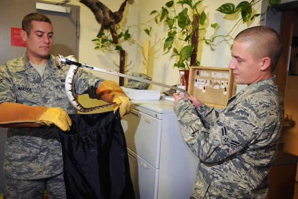 SPANGDAHLEM AIR BASE, Germany -- Airman 1st Class Sean Marsich and Airman 1st Class Jacob Abplanalp, 52nd Civil Engineer Squadron entomology shop, recover a python that was released to control the rodent population here Oct. 6. The entomology shop is responsible for all rodent and pest control on the base. (U.S. Air Force photo/Airman 1st Class Nathanael Callon)