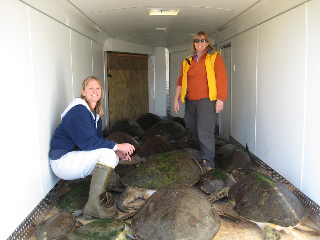 45th Civil Engineer Squadron biologists Angy Chambers and Martha Carroll transport cold-stunned sea turtles from the shoreline of Cape Canaveral Air Force Station in a trailer provided by the 45th Security Forces Squadron. (U.S. Air Force photo courtesy of Martha Caroll)