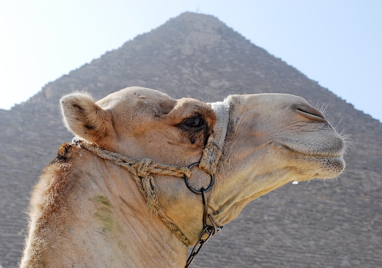 A camel stands in front of the Pyramid of Khufu in Giza, Egypt near Cairo. The Pyramid of Menkaure and the Pyramid Khafre are placed near this Great Pyramid and are known as the Pyramids of Giza. The Pyramids of Giza are believed to have been built around 2500 B.C. and are known as one of the Seven Wonders of the World. (U.S. Air Force photo/Senior Airman Sara Csurilla)