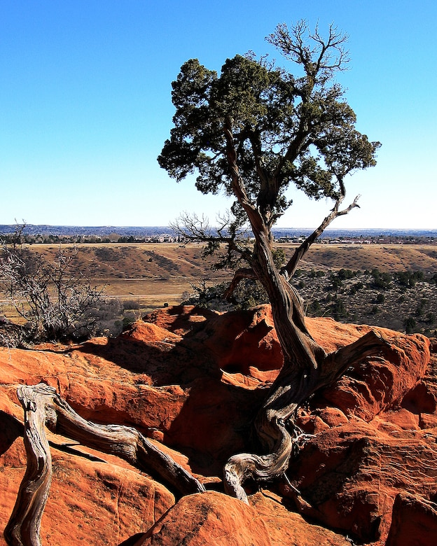 COLORADO SPRINGS, Colo. -- One of many trees at Garden of the Gods near Colorado Springs. Colorado has a wide variety of plant and animal life for servicemembers stationed at Front Range military bases to see. (U.S. Air Force photo by Staff Sgt. Steve Czyz)