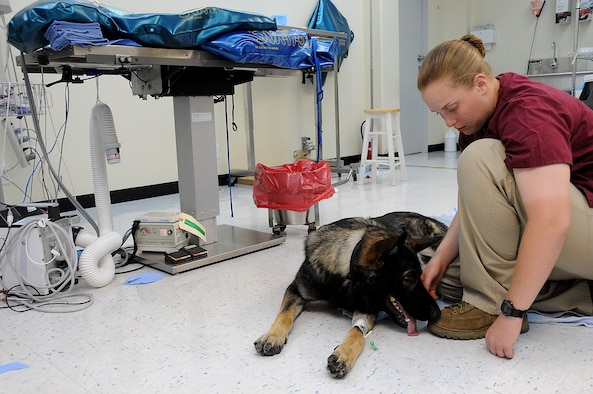 Military Working Dog Nico is greeted by his handler, Marine Corps Lance Cpl. Alyssa Andersen, after awaking from Gastropexy surgery at the veterinary clinic, Kadena Air Base, Japan, Aug. 3, 2010. The Gastropexy surgery was a preventive surgery that ensures the stomach doesn't turn onto itself. (U.S. Air Force photo/Staff Sgt. Darnell T. Cannady)