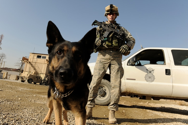 photo essay it s a dog s life at bagram > u s air force  staff sgt mitchell stein and artus his military working dog patrol an entry