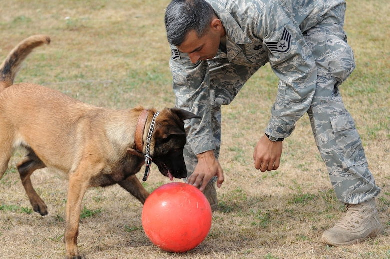 RAF MILDENHALL, England -- Staff Sgt. Raymond McMahon, 100th Security Forces Squadron Military Working Dog handler, plays ball with MWD Vvonya after a training session July 9. (U.S. Air Force photo/Karen Abeyasekere)