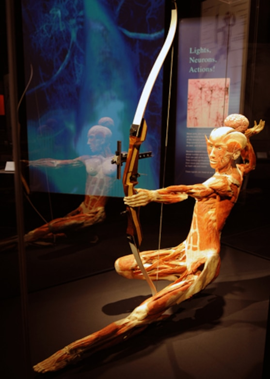 DENVER, Colo. -- The Archer shows the tension in virtually all the muscles of her body, shortly after the arrow left her bow. (U.S. Air Force photo by Airman 1st Class Marcy Glass)