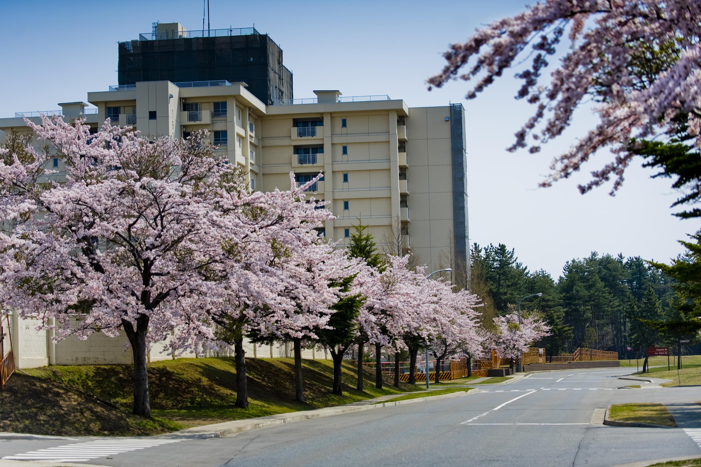 Misawa afb