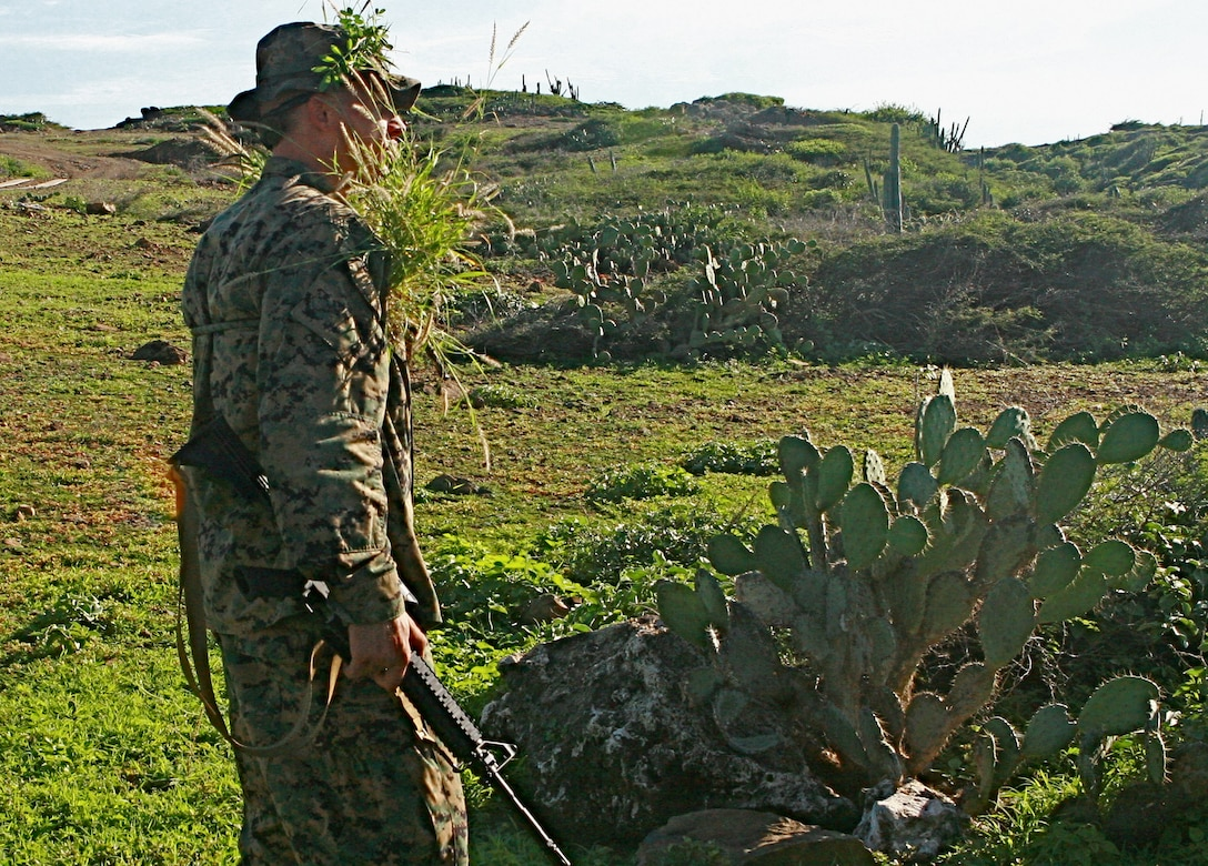 A Reconnaissance Marine of 2nd Platoon, Force Reconnaissance Company, II Marine Expeditionary Force, prepares for the stalking portion of the competition by disguising himself with vegetation in Aruba, Nov. 10, 2010. Stalking was the first part of the competition that the Marines competed in for a score.