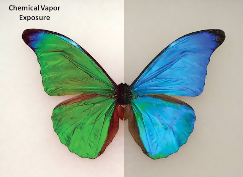 Butterfly Biology Inspires New Sensing Capability > Wright-Patterson
